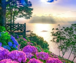 flowers, view, and love image