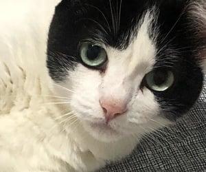 animal, cute cat, and cute image