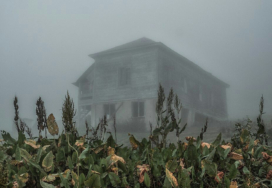Dead Flowers, haunted house, and dark image