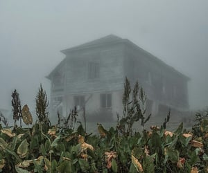 dark, Dead Flowers, and foggy image