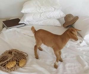animal, beige, and goat image