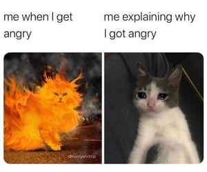 angry, cat, and meme image