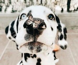 dog and pets image