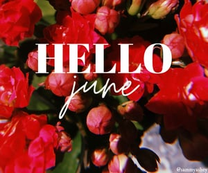 calendar, inspiration, and plants image