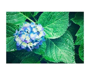 flower, sasa, and instagram image