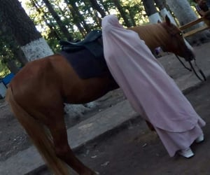 arab, colors, and horse image