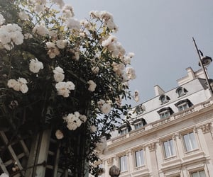 flowers, architecture, and white image