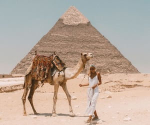 camel, egypt, and travel image