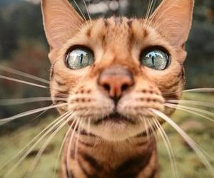 animals, cat, and fun image