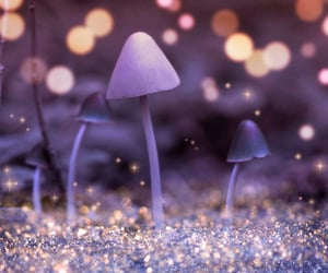 enchanted, Fairies, and fairy tale image