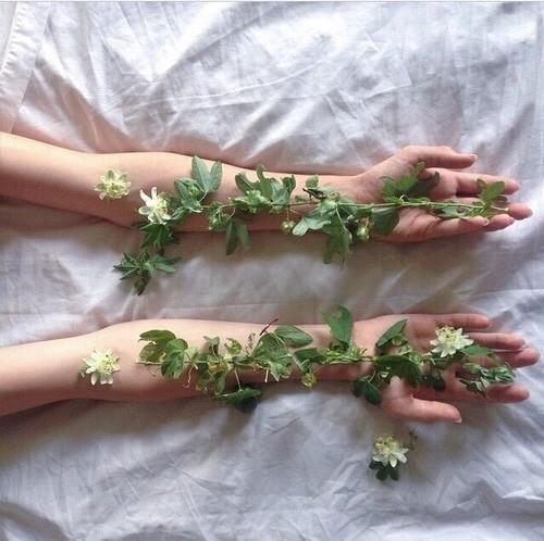 air, botany, and greenery image
