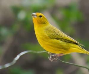 Animais, animals, and bird image