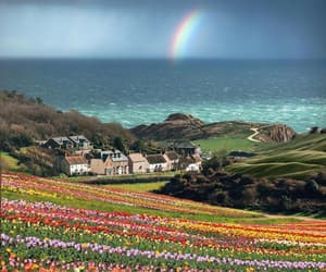 travel, rainbow, and flowers image