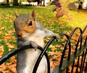 autumn, nature, and squirrel image