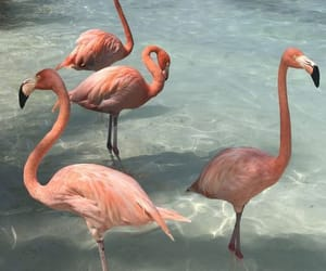 What the Flock? Yes, you read that correctly, Flamingo beach is a real thing! I don't know about you, but pink flamingos have always fascinated me. When I heard about this place and saw pictures, I immediately added it to my bucket list. I mean, who would