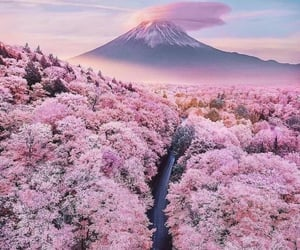 japan, pink, and nature image