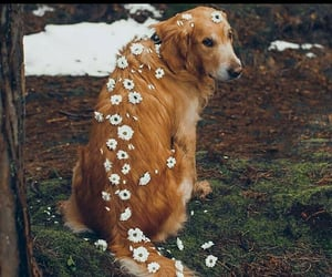 dogs, flowers, and dog lovers image