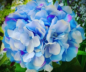 flores, flowers, and hydrangea image