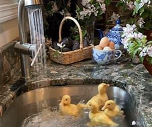gif and lucky ducks image