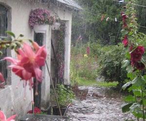 rain, flowers, and nature image