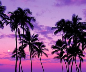 beach, palm tree, and purple image