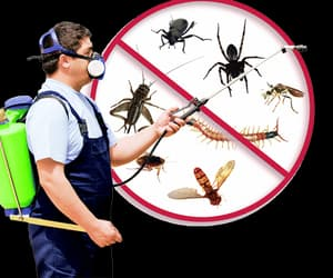 pest control fulham, pest control wembley, and pest control greenford image