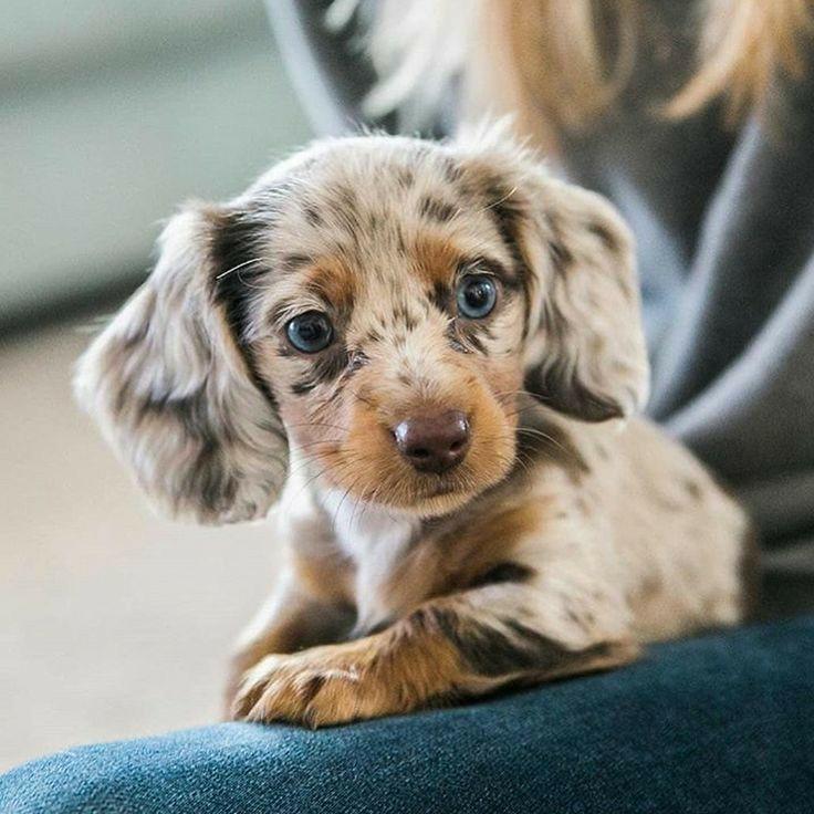 dog, animals, and blue eyes image