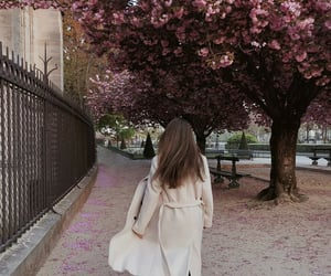 blossoms, cities, and nature image