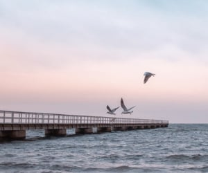 aesthetic, beach, and birds image