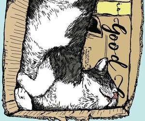 cats, felinos, and gatitos image