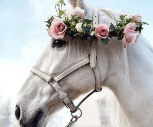 horse, beautiful, and flower image