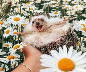 hedgehog, daisy, and flowers image