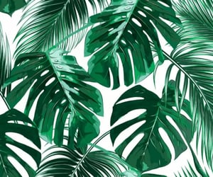 green and tropical image