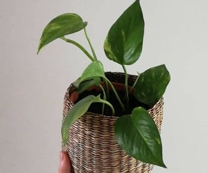 nature, plant, and house plants image