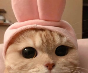 bunny, bunny ears, and cat image
