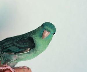 bird, green, and animal image