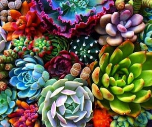 plants, cactus, and succulents image