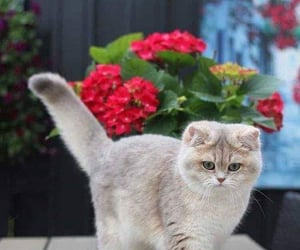 animal, flowers, and kitty image