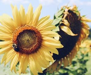 field, flower, and flower field image