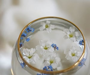 aesthetic, flowers, and forget me not image