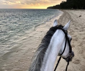 horse, animal, and beach image