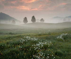 flower, fog, and green image