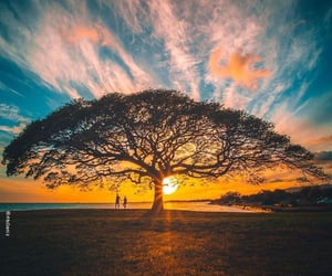 Honolulu and the tree of life image