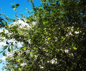 beauty, blue sky, and green image