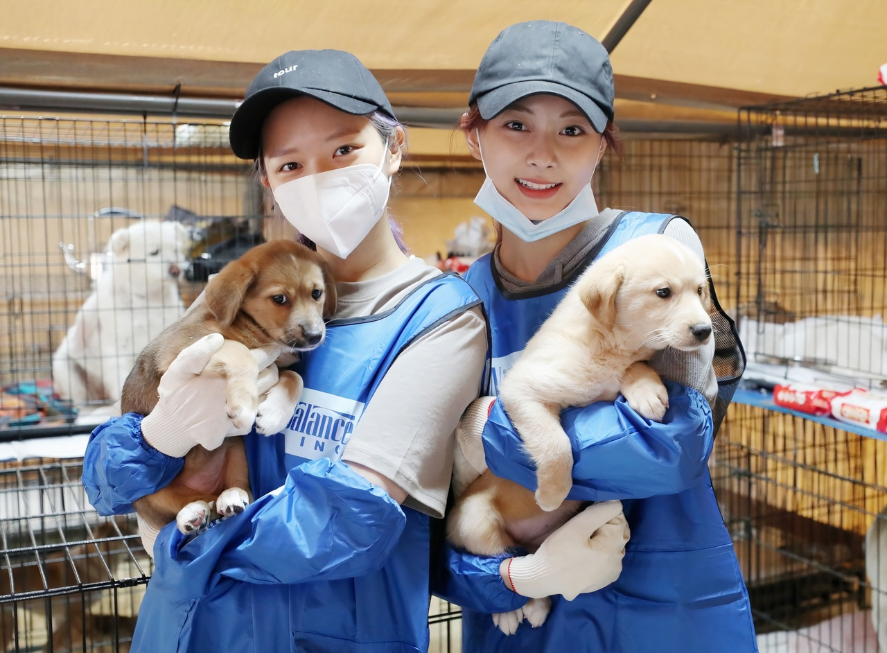 dogs, korean, and taiwanese image