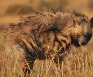 animal, animals, and hyena image