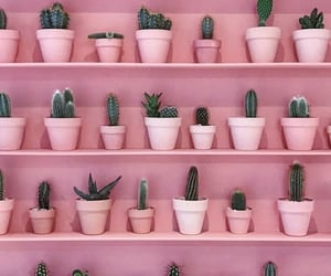 pink, cactus, and cute image