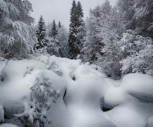 december, snow, and forest image