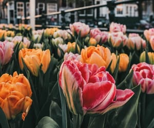 amsterdam, flowers, and photography image