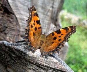 butterflies, farfalla, and mariposa image